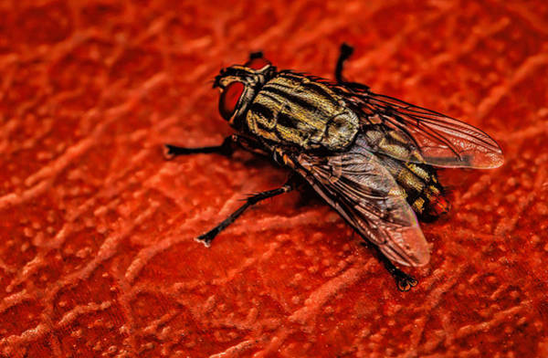 Photograph - The Fly  by Dave Bosse