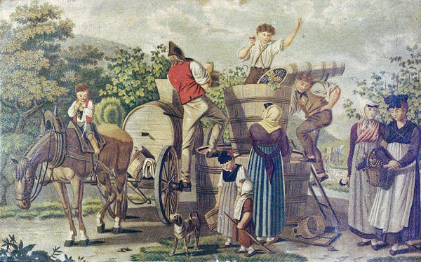 Grape Drawing - The Harvesting Of Wine Grapes, 19th Century Engraving, Time by English School