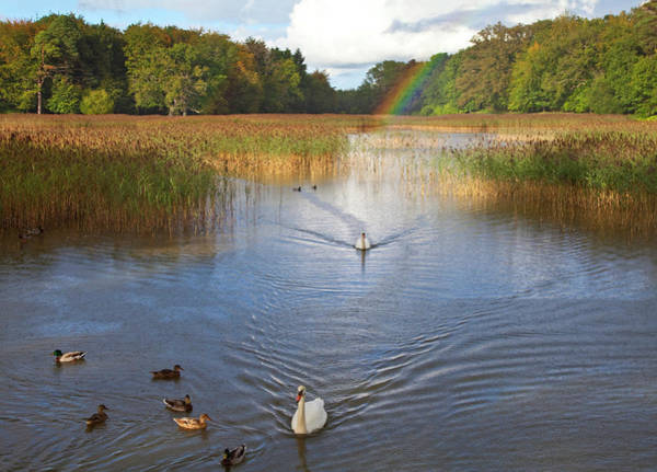 Mute Swan Photograph - The Lake At Emo Court, Emo Village by Panoramic Images