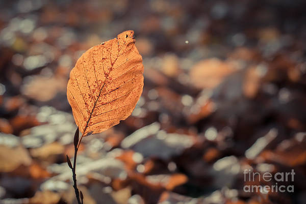 Photograph - The Leaf by Hannes Cmarits