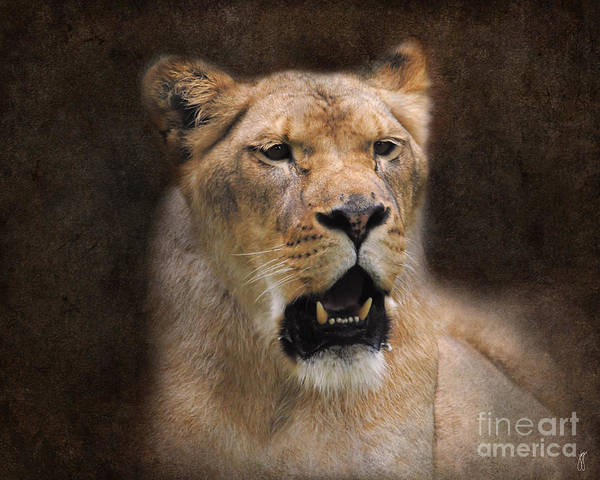 Photograph - The Lioness by Jai Johnson