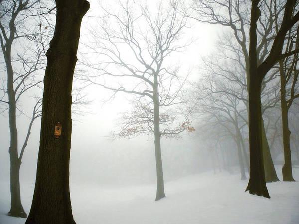 Photograph - The Mists Of Avalon by Natasha Marco