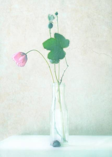 Filter Photograph - The Pink Flower by Delphine Devos