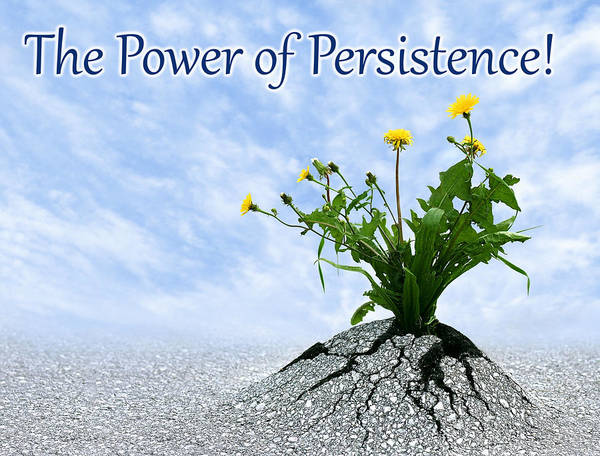 Photograph - The Power Of Persistence by Dreamland Media