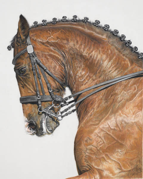Dressage Painting - The Red Horse by Terry Kirkland Cook