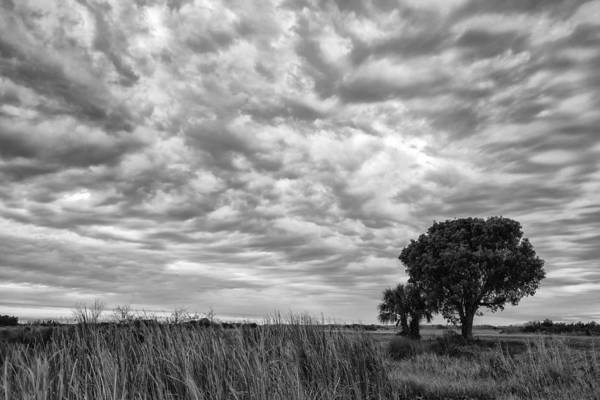 Wall Art - Photograph - The Right Tree by Jon Glaser