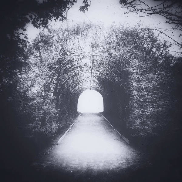Photograph - The Road Less Traveled by Natasha Marco
