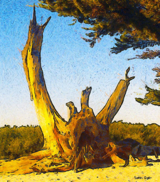 Carmel By The Sea Photograph - The Stump At Carmel By The Sea Beach by Barbara Snyder