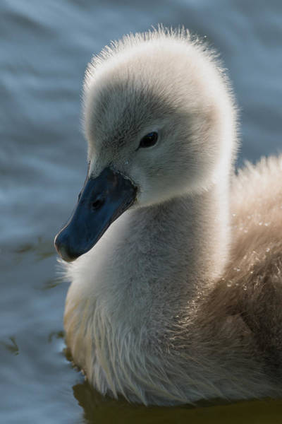 Ugly Photograph - The Ugly Duckling by Michael Mogensen