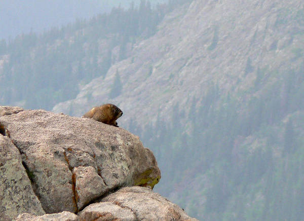 Marmot Photograph - The View by Laurel Powell