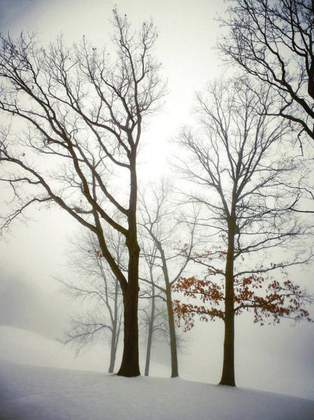 Photograph - The Woods Of Winter by Natasha Marco