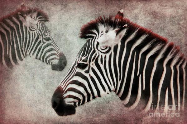 Digital Art - The Zebra by Angela Doelling AD DESIGN Photo and PhotoArt