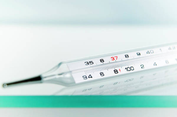 Thermometer Wall Art - Photograph - Thermometer by Gustoimages/science Photo Library