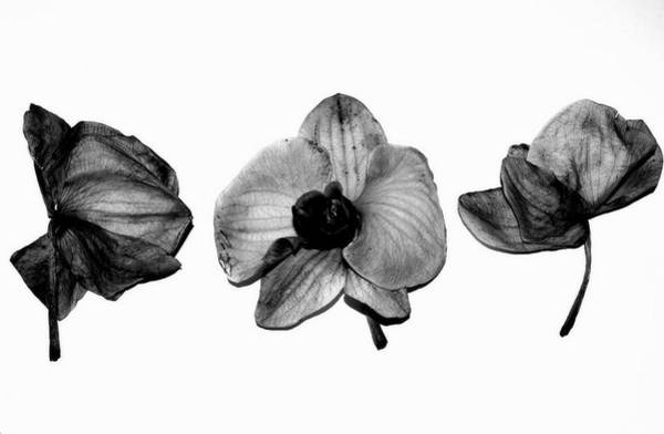 Photograph - Three Beauties by Anita Kovacevic