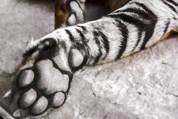 Digital Art - Tiger Paw by Photographic Art by Russel Ray Photos