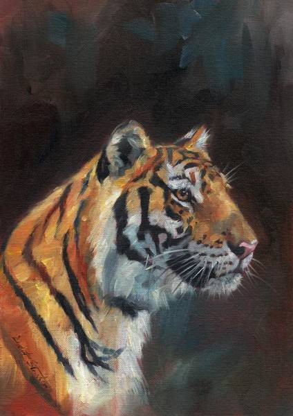 Siberian Tiger Wall Art - Painting - Tiger Portrait by David Stribbling