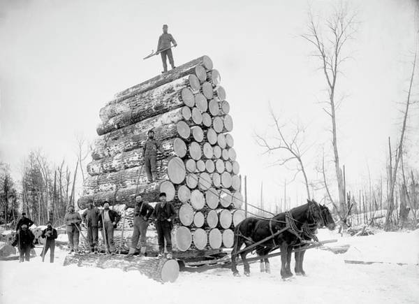 Wall Art - Photograph - Timber Logging by Library Of Congress/science Photo Library