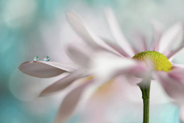 Tender Photograph - Tiny Duo by Heidi Westum