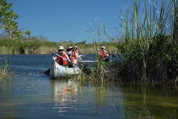 Everglade Photograph - Tourists Canoeing In Mangrove Swamp by Jim West