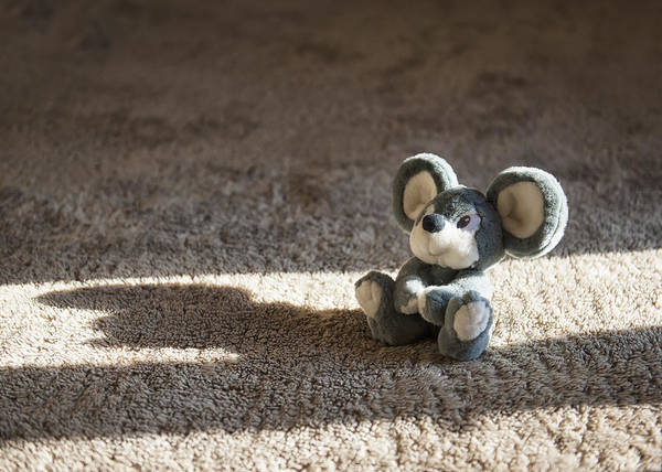 Photograph - Toy by Gouzel -