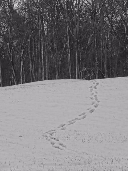 Into The Woods Wall Art - Photograph - Tracks In The Snow by Dan Sproul