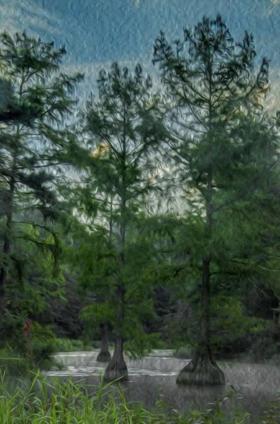 Bald Cypress Digital Art - Trap Pond 7 by Darlene Freas