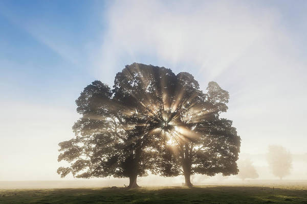 Fog Photograph - Tree At Sunrise, Usk Valley, South by Peter Adams