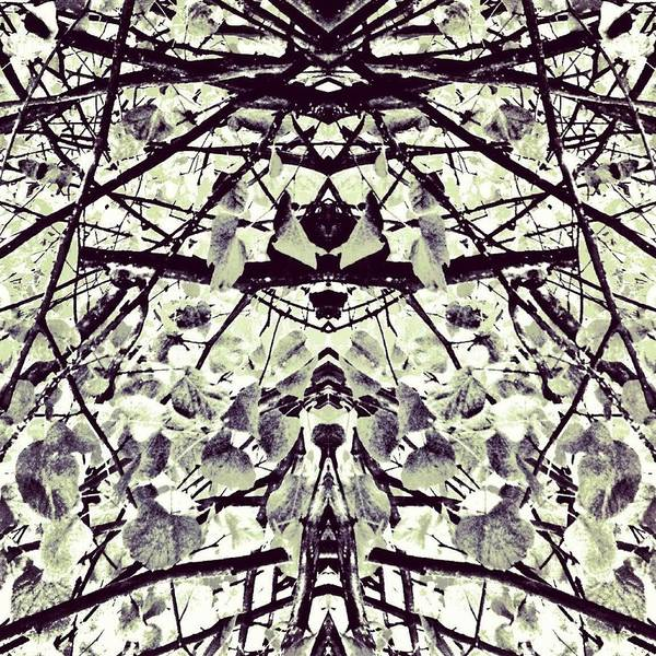Monochrome Photograph - Tree Branches B 'n' W 2 by Jason Michael Roust