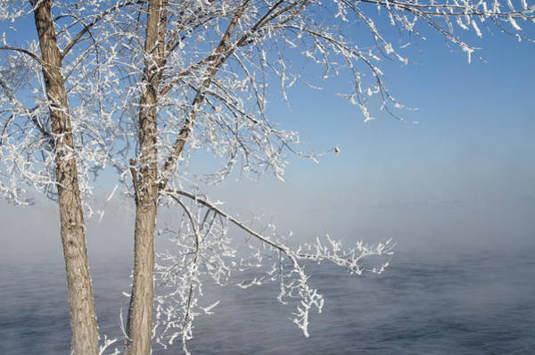 Photograph - Tree By The River Covered With Hoar Frost. by Rob Huntley