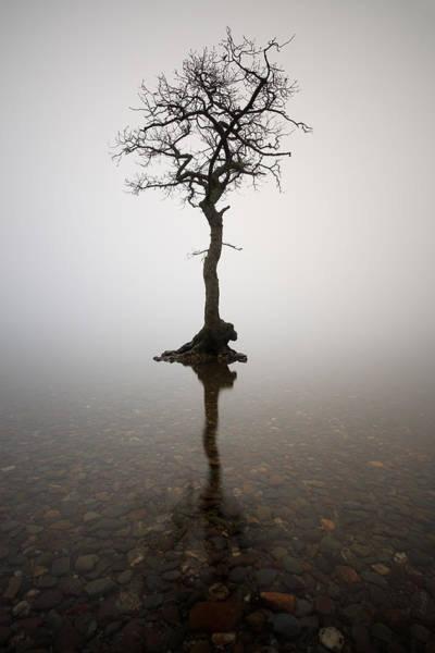 Photograph - Tree by Grant Glendinning