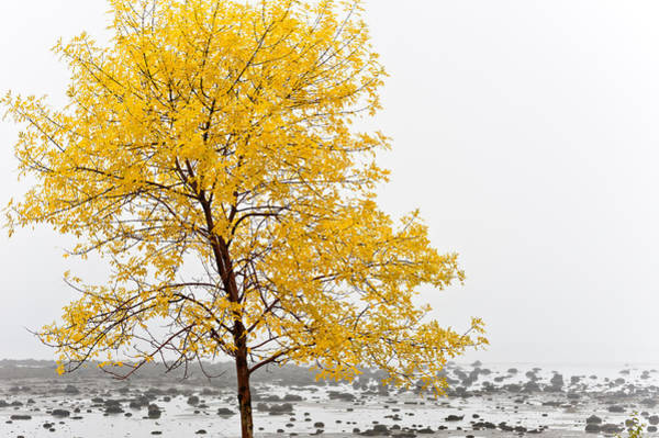 Photograph - Tree In Autumn Color  by U Schade
