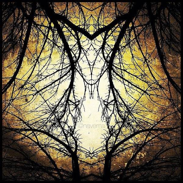 Tree Veins Art Print
