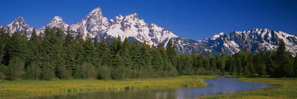 Schwabacher Photograph - Trees Along A River, Near Schwabachers by Panoramic Images