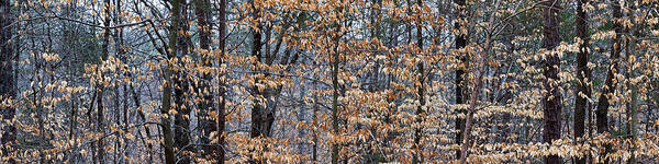 Forsyth Photograph - Trees In Autumn, Lewisville, Forsyth by Panoramic Images