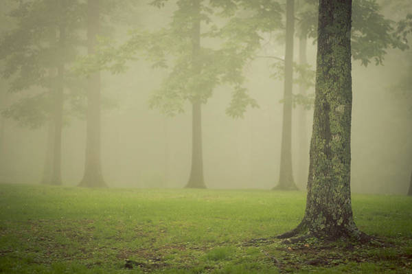 Photograph - Trees In Fog by Joye Ardyn Durham