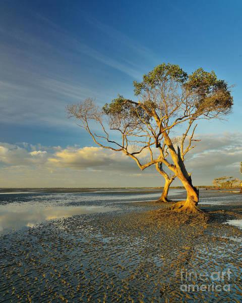 Mangroves Digital Art - Trees Of Beachmere by Dwarak Calayampundi