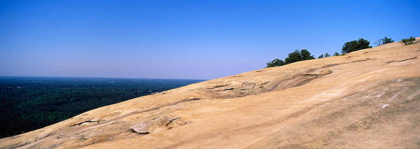 Fulton County Photograph - Trees On A Mountain, Stone Mountain by Panoramic Images