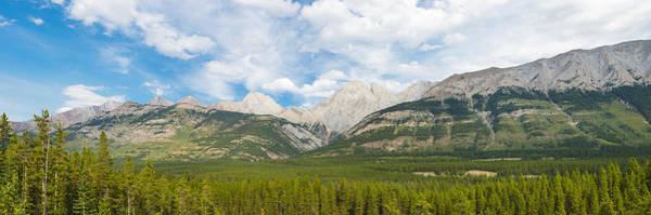 Wall Art - Photograph - Trees With Canadian Rockies by Panoramic Images