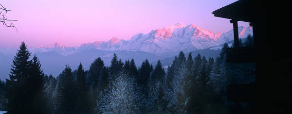 Wall Art - Photograph - Trees With Snow Covered Mountains by Panoramic Images