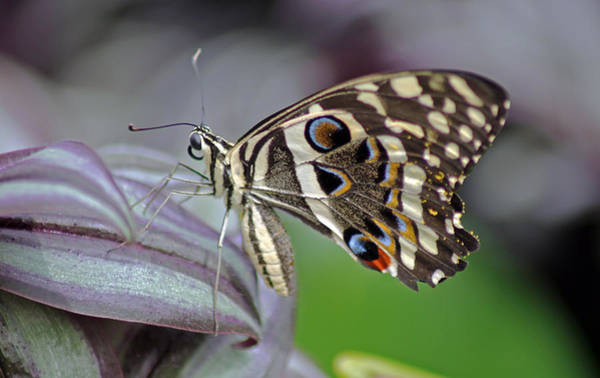 Photograph - Tropical Butterfly by Tony Murtagh