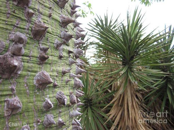 Photograph - Tropical Garden by Chani Demuijlder