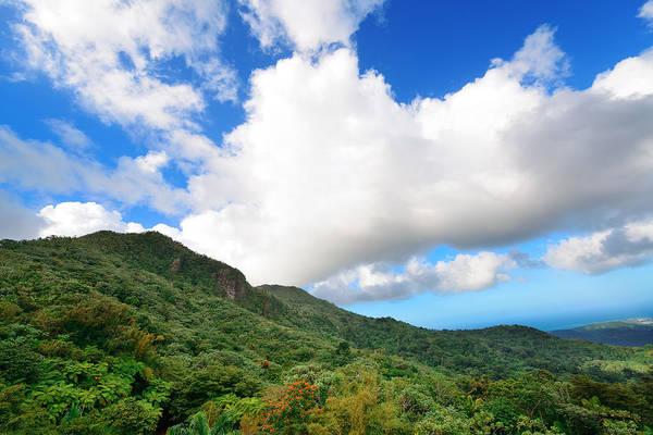 Photograph - Tropical Rain Forest In San Juan by Songquan Deng