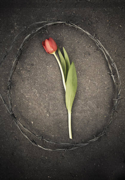 Photograph - Tulip by Maria Heyens