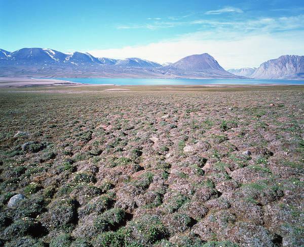Tundra Wall Art - Photograph - Tundra Hummocks by Simon Fraser/science Photo Library