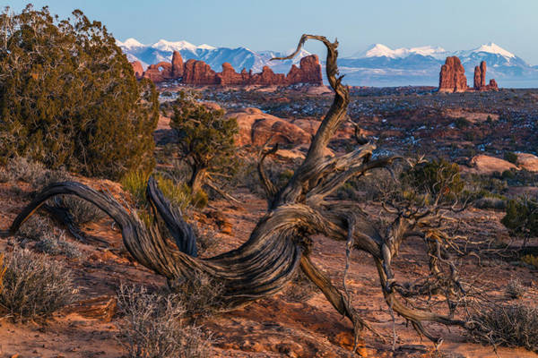 Photograph - Twisted Desert by Dustin  LeFevre