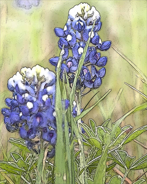 Texas Bluebonnet Digital Art - Two Bluebonnets by Jeanne A Martin