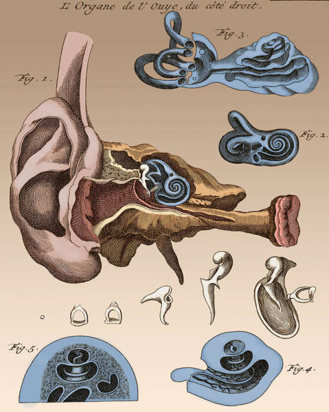 Photograph - Two Diagrams Of Ear, 1744 by Wellcome Images