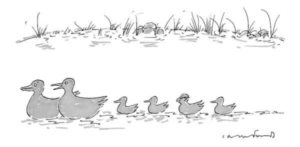 Two Ducks Lead A Line Of Four Ducklings Art Print