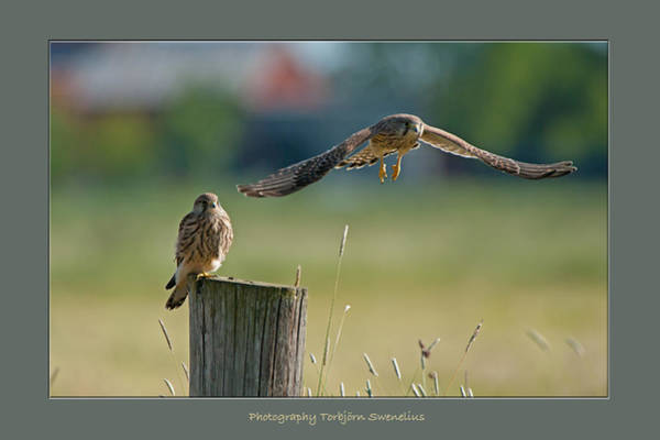 One Of A Kind Photograph - Two Of A Kind Leaving One Behind by Torbjorn Swenelius