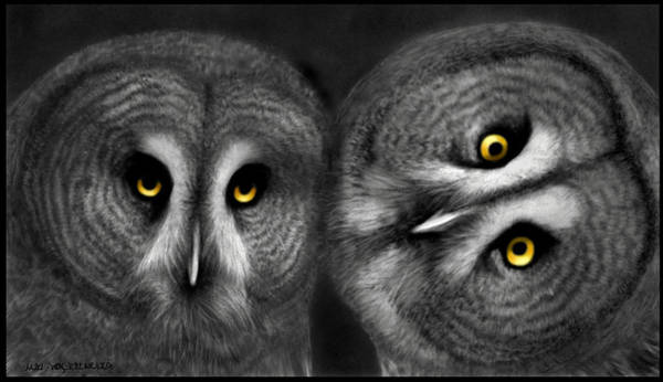 Nocturnal Drawing - Two Owls Looking by Miki Krenelka